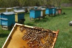 Peine de la abeja Fotografía de archivo