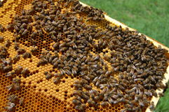 Peine de la abeja Fotos de archivo