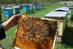 Peine de la abeja Imagen de archivo libre de regalías