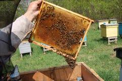Peine de la abeja Foto de archivo