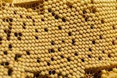 Peine de la cría de las abejas imagenes de archivo
