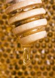 Peine de la miel Foto de archivo libre de regalías