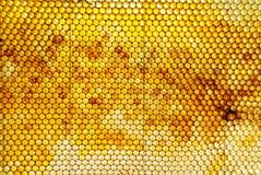 Peine de la miel Fotografía de archivo