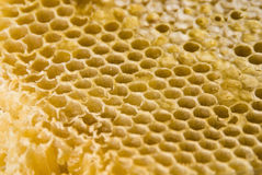 Peine de la miel Fotos de archivo