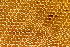 Peine de la miel con la miel como fondo Imagen de archivo