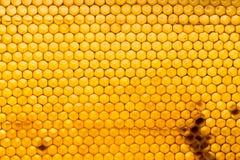Peine de la miel con la miel como fondo Foto de archivo