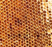 Peine de la miel con la miel como fondo Fotos de archivo libres de regalías