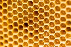 Peine de la miel con la miel como fondo Fotografía de archivo libre de regalías