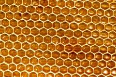 Peine de la miel con la miel como fondo Imagen de archivo libre de regalías