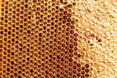 Peine de la miel con la miel como fondo Imágenes de archivo libres de regalías