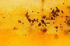 Peine de la miel con la miel como fondo Foto de archivo libre de regalías