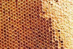 Peine de la miel con la miel como fondo Fotografía de archivo