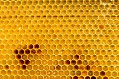 Peine de la miel con la miel como fondo Imagenes de archivo
