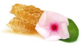 Peine de la miel con Nayantara medicinal Imagenes de archivo