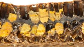 Peine de la miel con polen Foto de archivo libre de regalías