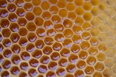 Peine de la miel del gradiente imagen de archivo libre de regalías