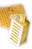 Peine de la reina de la abeja - mellifera de los Apis, cría artificial Foto de archivo libre de regalías