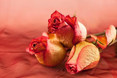 Peine des roses fanées Photos stock