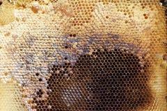 Peine lleno de la miel del marco con la miel dentro Colmena de la abeja Imágenes de archivo libres de regalías