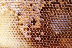 Peine lleno de la miel del marco con la miel dentro Colmena de la abeja Imagen de archivo libre de regalías