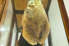 Peine natural de la miel Foto de archivo libre de regalías