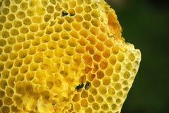 Peine salvaje de la miel Fotografía de archivo libre de regalías