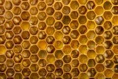 Peines de la abeja Fotografía de archivo libre de regalías