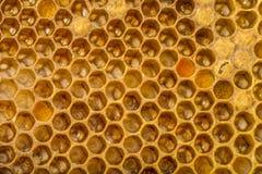 Peines de la abeja Fotografía de archivo