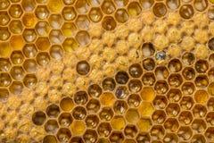Peines de la abeja Imágenes de archivo libres de regalías