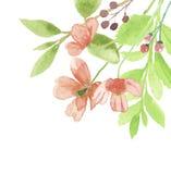 Peint à la main floral de Poppy Corner Frame Summer Flower d'aquarelle Images stock