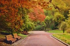 Peintre avec un chevalet se tenant paisiblement en parc d'automne Photographie stock libre de droits