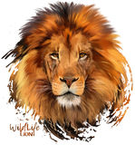 Peintre d'aquarelle de lion Photos libres de droits