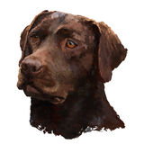 Peinture à l'huile de Labrador Image libre de droits