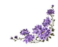 Peinture chinoise de main d'encre des fleurs de pivoine Photos libres de droits