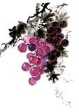 Peinture chinoise de main d'encre des raisins Photos stock