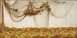Peinture décorative Photo stock