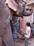 peinture d'éléphant Photographie stock libre de droits