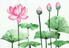 Peinture d'aquarelle de fleur de lotus rose Photos stock