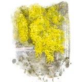 Peinture d'or d'aquarelle de fleur de douche illustration stock
