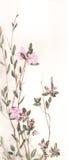 Peinture d'aquarelle de fleurs de thé de Labrador Photo stock