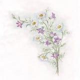 Peinture d'aquarelle de jacinthe des bois et de chamomole illustration stock