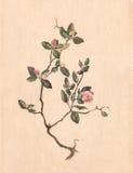 Peinture d'aquarelle de thé de Labrador illustration de vecteur