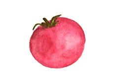 Peinture d'aquarelle de tomate Image libre de droits