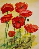 Peinture d'aquarelle des pavots Images stock