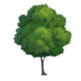 peinture d'arbre Image stock