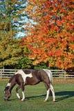 Peinture d'automne Photos stock