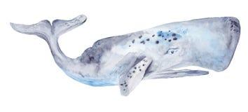 Peinture de baleine d'aquarelle Photo stock