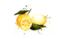 Peinture de citron-aquarelle de fruit Photo stock