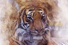 Peinture de Digital d'aquarelle d'effet de vintage de Tiger Head illustration libre de droits