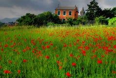 Peinture de nature Photo libre de droits